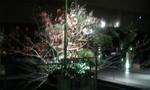 2012-01-07 21.17.41.jpg